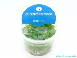 Christmas Moos (In Vitro)